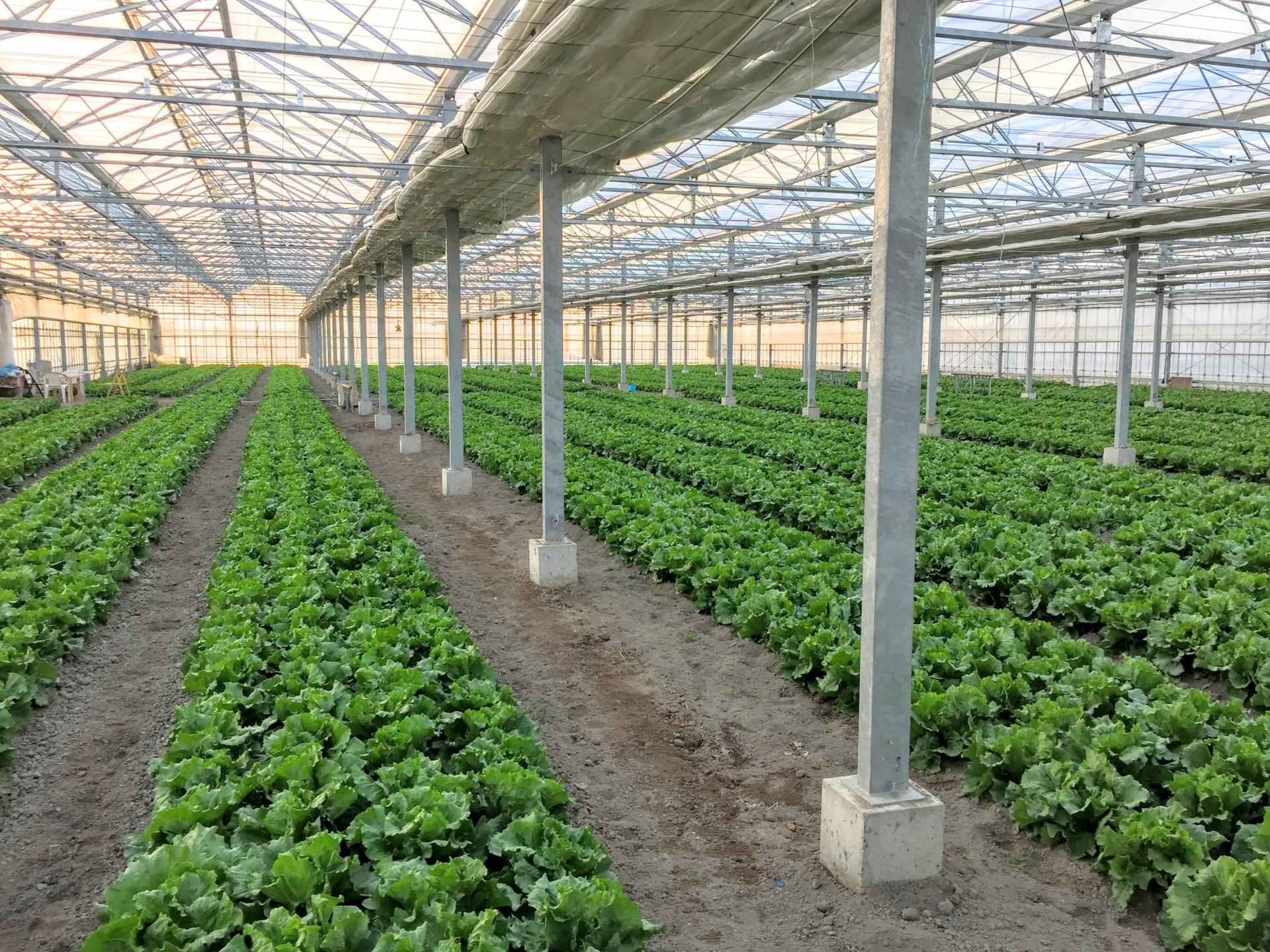 温度管理のための温湿度センサーの安価なIoT導入【農業における活用事例】