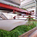 食品製造加工業イメージ